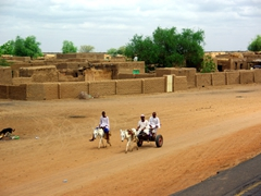 Donkey transport is a reliable means of transport in rural Sudan