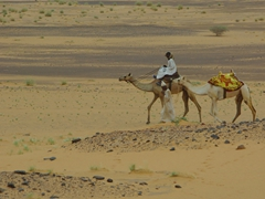 Cameleers guide their camels near the Meroe Pyramids (about 200 KM from Khartoum)