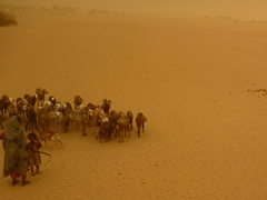 Goat herders still have to watch their flock despite the incessant ongoing sandstorm