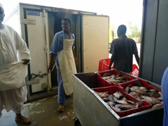 Sudanese workers bemused by our presence at the Nubian Fisheries in Wadi Halfa
