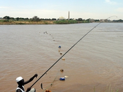 A fisherman hauls in catfish as the convergence of the Blue and White Nile Rivers; Khartoum