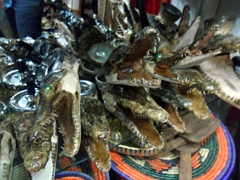 Baby crocodile ashtrays for sale (a horribly tacky souvenir); Omdurman Souq