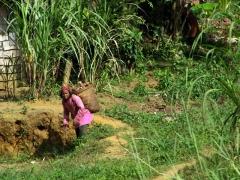 Farmer harvesting her cassava; Bitam