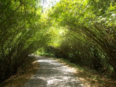 A natural bamboo archway; Lope National Park