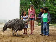 Children feed a dwarf ostrich at the Cango Ostrich Farm