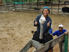 Becky is all smiles as she mounts an ostrich at the Cango Ostrich Farm near Oudtshoorn