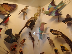 The myriad of South African birds on display at Cape of Good Hope's Buffelsfontein Vistor's center