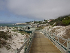 Boardwalk leading to the jackass penguin colony; Boulder Beach