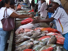 Fish vendors making a killing; daily fish market in downtown Victoria