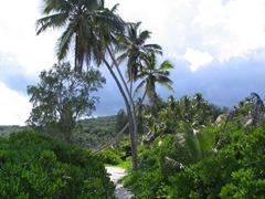 The footpath linking Grand Anse to Petite Anse