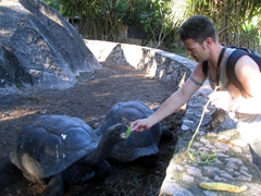 Robby feeding the giant tortoises at the L'Union Estate; La Digue