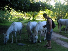 Robby gets up close and personal with some horses on the L'Union Estate