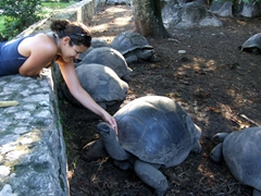 Becky loved petting the giant tortoises, one of the highlights of visiting La Digue