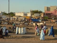 Dakar cattle market