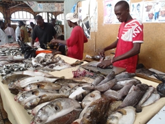 Fresh fish for sale; Dakar's Marche Kermel