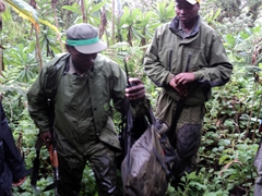 The mountain gorilla trackers keep daily tabs on the family's activities and carry AK-47s to protect themselves from poachers