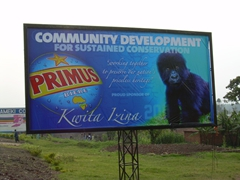 Primus beer is active in conservation efforts for the mountain gorillas as evidenced by this billboard; Musanze