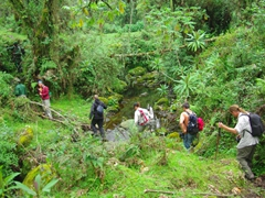 Our group crossing a small stream in search of the mountain gorillas; Volcanoes National Park