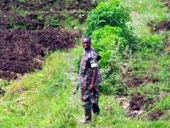 Snapshot of a Rwandan soldier training in Volcanoes National Park