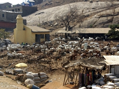 Cattle market adjacent to a neighborhood mosque; near Abuja