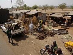 Cassava, a staple fuel, being loaded onto an awaiting truck