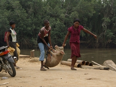 Poor piggy! Locals carrying a pig towards Creek Town