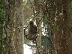 A drill monkey surveys the scene; Afi Mountain Drill Sanctuary