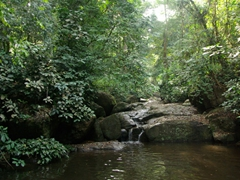 What a treat for us! A cool, refreshing waterfall pool after hiking through the forest around Afi Sanctuary