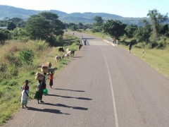 Locals carrying their loads down the road; Lake Malawi