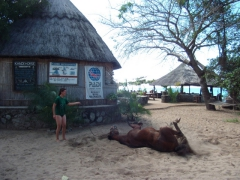 Sara and her horse (after she swam in Lake Malawi with it)