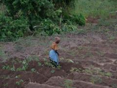 A woman tends to her cassava field; Kande Beach