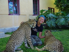 Becky is greeted by two cheetahs who lick her arms by way of saying hello; Camp Otjitotongwe