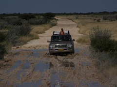 4WD is a must while tackling some of the more muddy roads in Etosha
