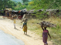 Women transporting firewood