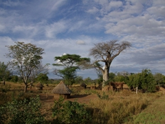 Simple hut dwellings are found everywhere throughout the Mozambique countryside