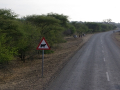 """A """"caution, cow crossing"""" sign post is perhaps the most common sign in Mozambique where cows are in abundance"""