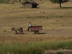 We found the Mozambique people to be quite friendly. Here, a farmer directing his donkey cart waves at our passing truck