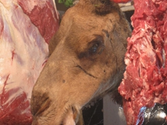 Camel head for sale in the Fes meat market