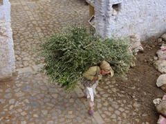A hardy Chefchaouen woman bends beneath her burden of twigs