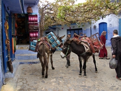 Traffic jam in Chefchaouen's medina