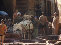 Donkeys carrying leather pieces for the tanneries; Fes