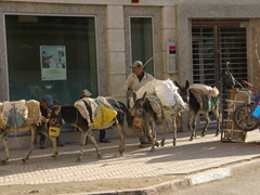 Donkey train; Fes