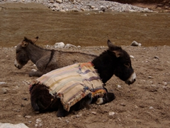 Donkeys getting a rare break; Todra Gorge
