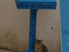 Cats live large in Essaouira where they have a seemingly unlimited supply of fish bits to snack on