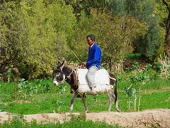 A villager on his donkey; Todra Gorge