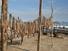 Fish hanging to dry at the Nouadhibou fish market