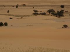 Desert landscape on the road trip to Nouakchott