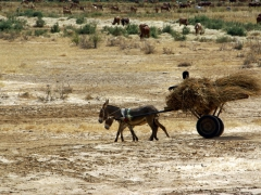A cartful of hay guided by a boy and his donkeys; Diawling National Park