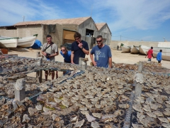 Dowelly, MJ, Goodie and Robby check out the Nouadhibou fish market
