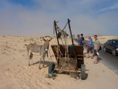Donkey carts on the side of the road are a common sight in Mauritania